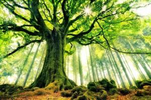 ALBERO fronte natura