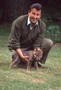 Franco Tassi with the Apennine wolf from the book on the wolf.