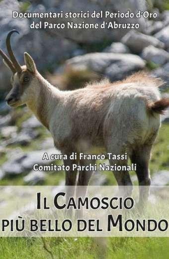 Il Camoscio d'Abruzzo più bello del Mondo